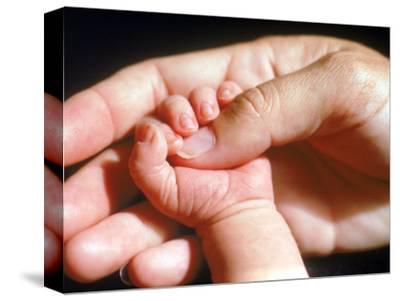 Man's Hand Holding Baby's Hand