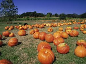 Pumpkin Patch, CA by Mitch Diamond
