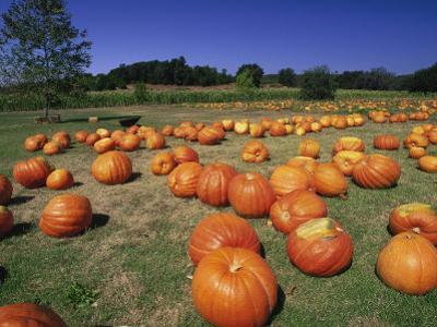 Pumpkin Patch, CA