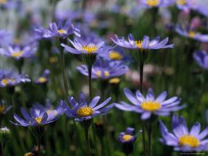 Purple Flowers by Mitch Diamond