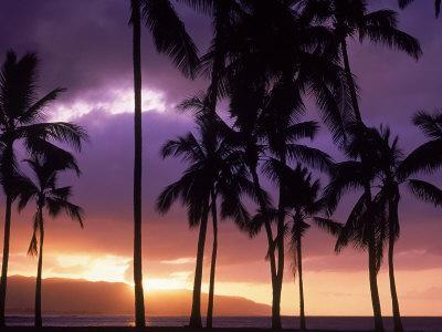 Silhouette of Palm Trees, Hawaii