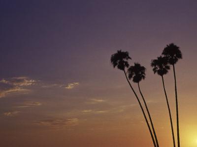 Sunset and Palm Trees, Laguna Beach, CA by Mitch Diamond