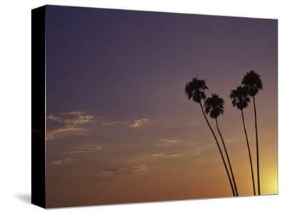 Sunset and Palm Trees, Laguna Beach, CA