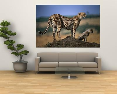 Mother Cheetah with Cub on Dirt Mound, Masai Mara National Reserve, Rift Valley, Kenya