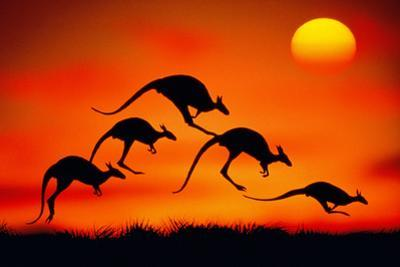 KANGAROOS IN MIDAIR AT SUNSET by Mitchell Funk