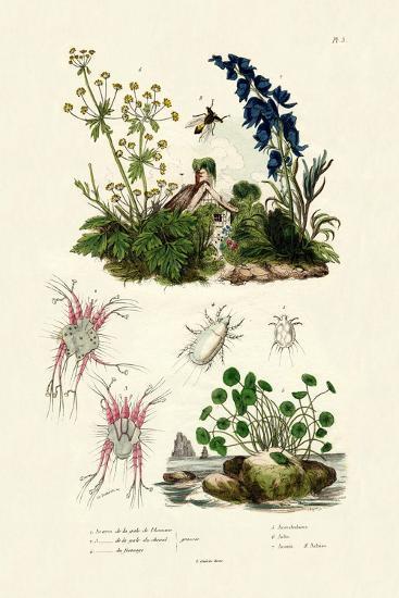 Mites, 1833-39--Giclee Print