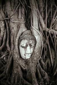 Ayutthaya, Thailand. Sandstone head of Buddha, at Wat Phra Mahathat, Ayutthaya Historical Park, nea by Miva Stock