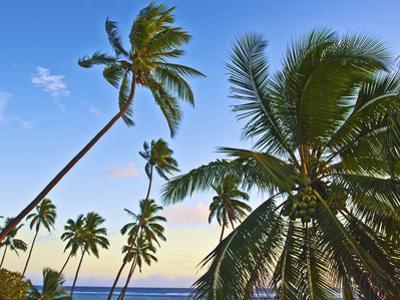Nanuku Levu, Fiji Islands Palm Trees with Coconuts, Fiji, South Pacific, Oceania
