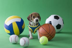 Beagle Puppy and Sports by MIXA