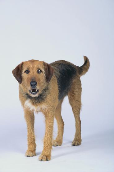 Mixed Breed Dog-DLILLC-Photographic Print