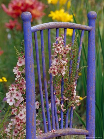 Mixed Flowers and Old Chair, Seattle, Washington, USA-Terry Eggers-Photographic Print