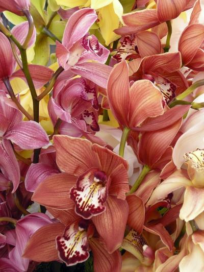 Mixed Orchids-Tony Craddock-Photographic Print