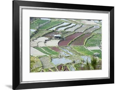 Mixed Paddy Fields Growing Vegetables under Highly Efficient Jhum System of Slash and Burn, India-Annie Owen-Framed Photographic Print