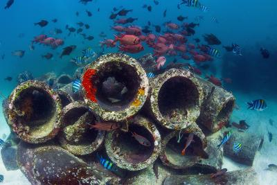 Mixture of Soldierfish (Myripristis) over Cement Pipes in Artifical Reef, Mabul, Malaysia-Georgette Douwma-Photographic Print