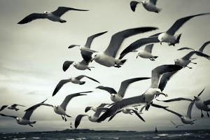 Bunch of Seagulls by moaan