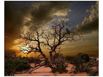 https://imgc.artprintimages.com/img/print/moab-tree_u-l-f74l1c0.jpg?p=0