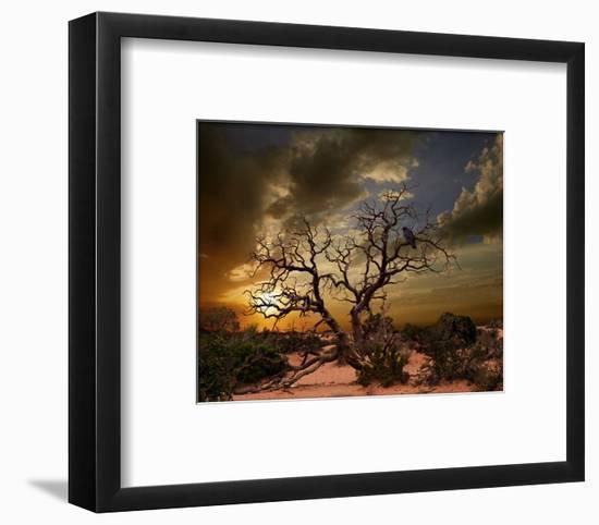 Moab Tree-Richard Desmarais-Framed Art Print