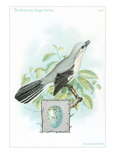 Mockingbird and Egg--Art Print
