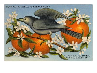 Mockingbird, Orange Blossoms, Florida--Art Print