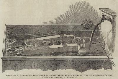 Model of a Fish-Ladder for Salmon to Ascend Milldams and Weirs--Giclee Print