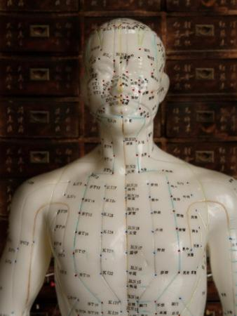 Model Showing Acupuncture Points