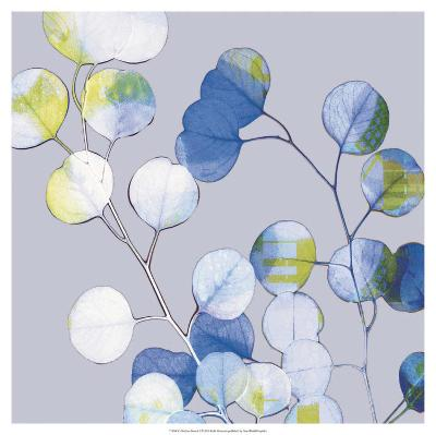 Modern Branch I-Ricki Mountain-Art Print