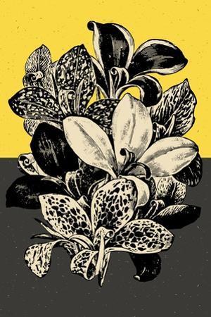 Modern Lilies