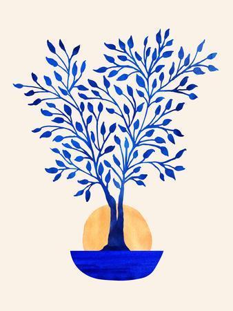 Indigo Ficus Sunrise