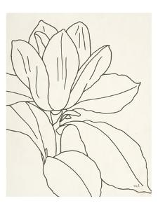 Magnolia Line Drawing v2 Crop by Moira Hershey