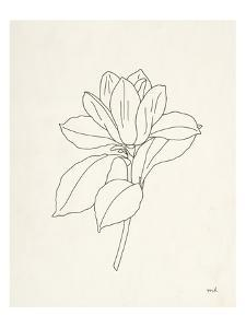 Magnolia Line Drawing by Moira Hershey