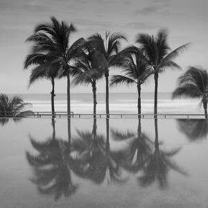 6 Palmeras by Moises Levy