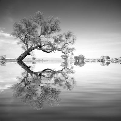 Arbol en Agua 3 BN by Moises Levy