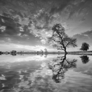 Arbol en Agua 5 BN by Moises Levy