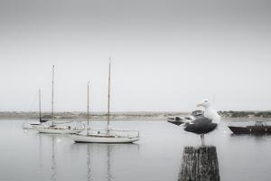 Four Boats & Seagull by Moises Levy