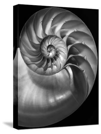 Nautilus 3-2