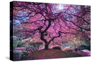 Pink Tree 2 by Moises Levy