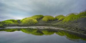 Reflejo Verde 2 by Moises Levy