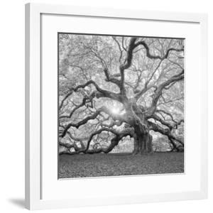 The Tree Square-BW 2 by Moises Levy