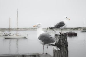 Two Seagulls & Boats by Moises Levy