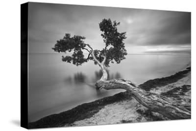Water Tree 10 BW