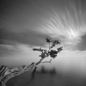Water Tree 3 by Moises Levy