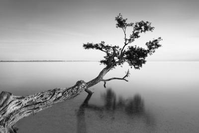 Water Tree IX by Moises Levy