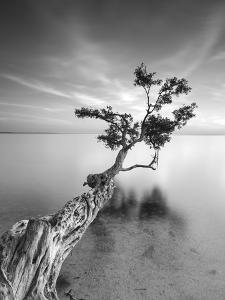 Water Tree V by Moises Levy