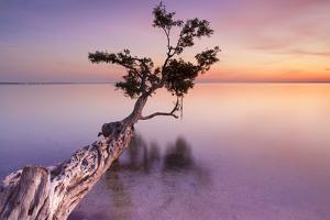 Water Tree XI by Moises Levy