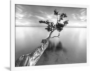 Water Tree XIII by Moises Levy