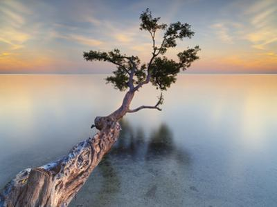 Water Tree XIV by Moises Levy