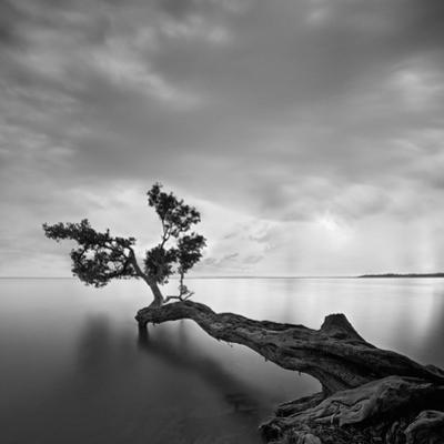 Water Tree by Moises Levy