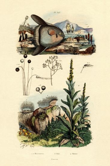 Mold, 1833-39--Giclee Print