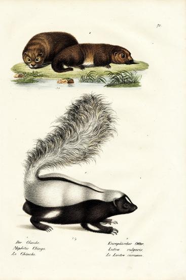 Molina's Hog-Nosed Skunk, 1824-Karl Joseph Brodtmann-Giclee Print