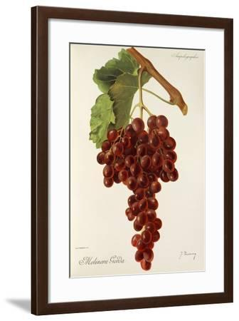Molinera Gorda Grape-J. Troncy-Framed Giclee Print